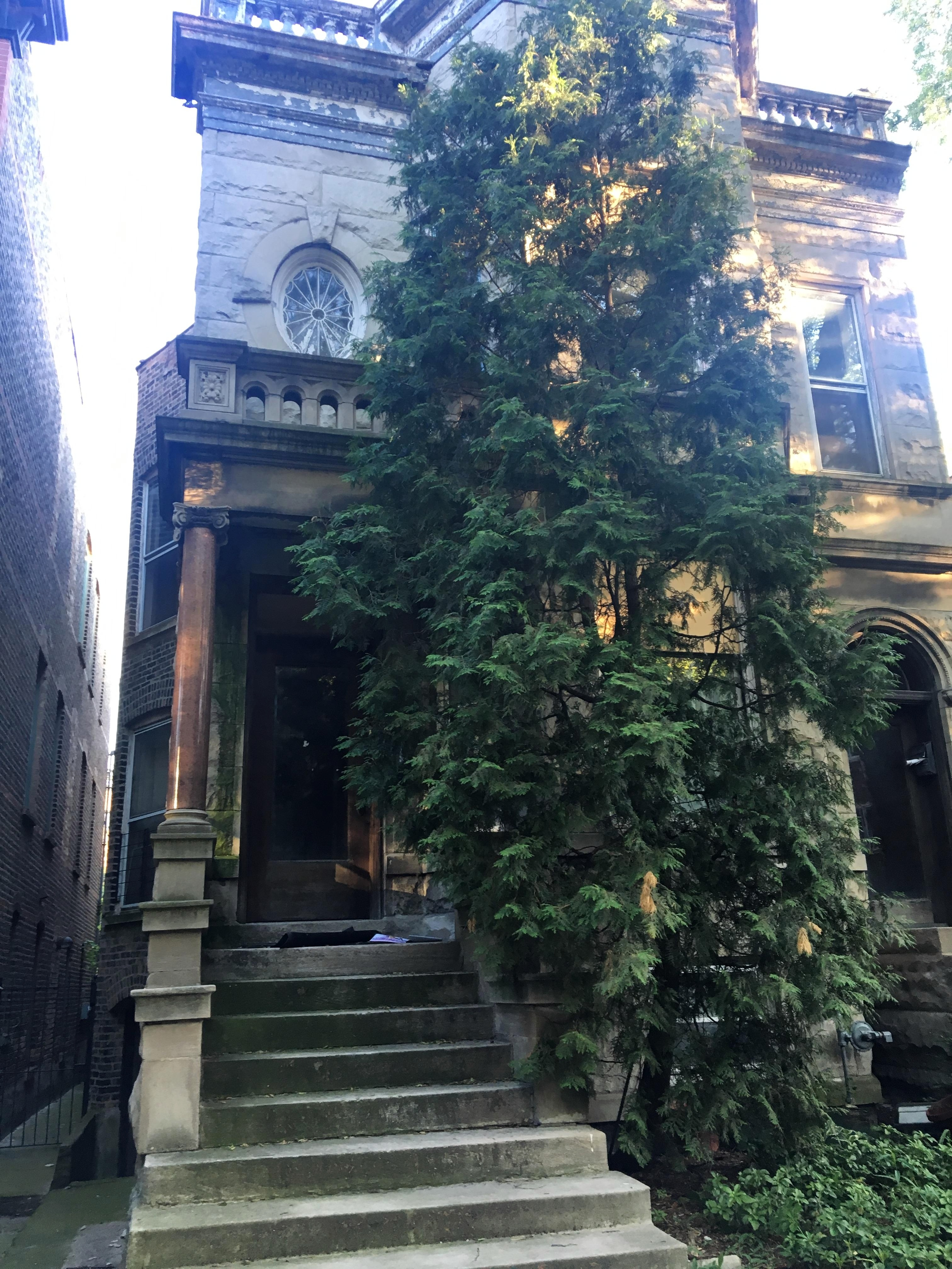 Chicago-Greystone-With-Large-Green-Tree-in-Center