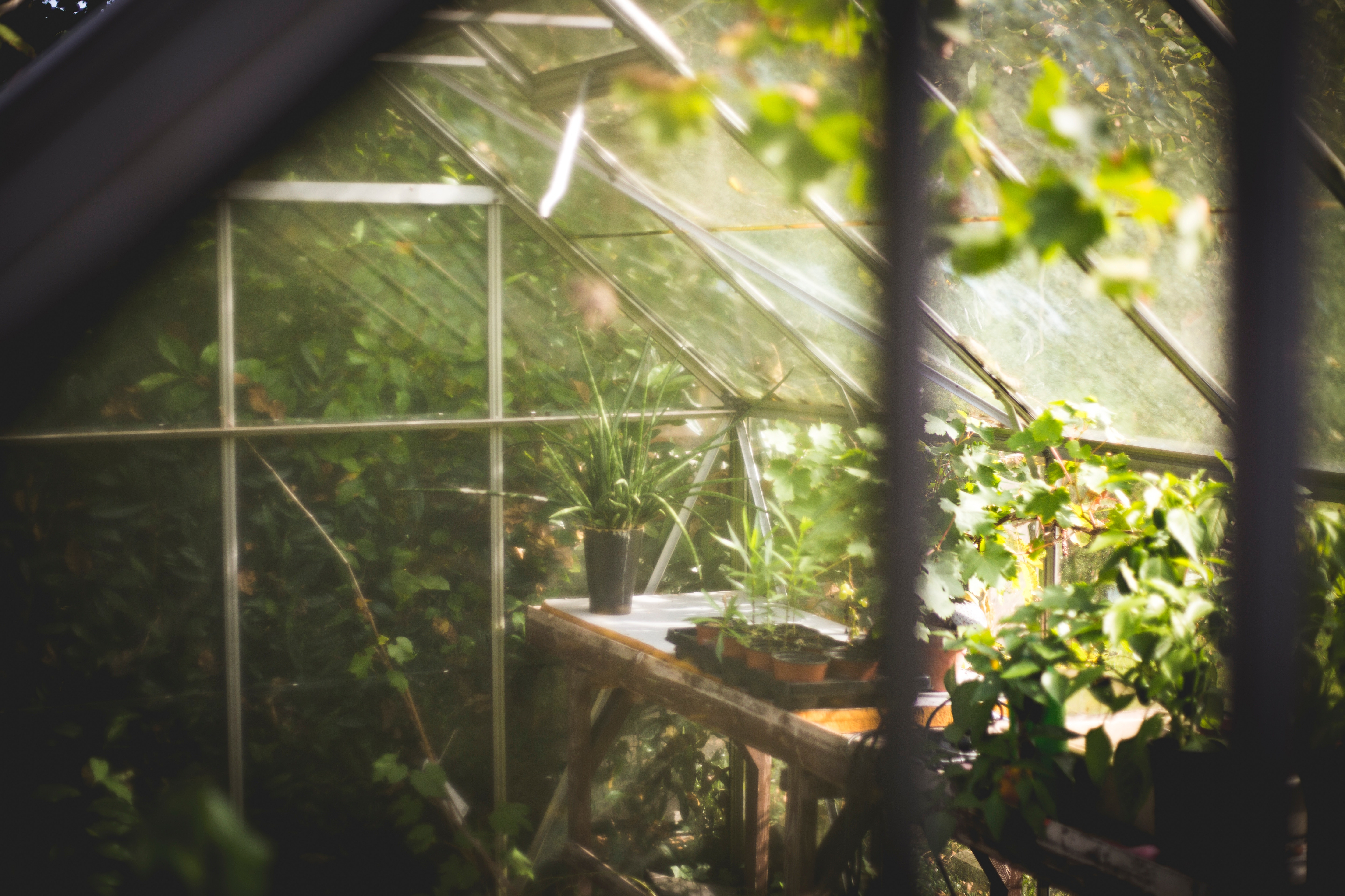 greenhouse-with-light-from-upper-right-hand-corner.jpg